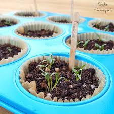 diy herb garden repurposed vintage muffin tins as diy herb vegetable seedling