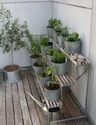 small space gardening honeysuckle life