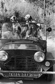 bichon frise z hter hessen 243 best dogs and their women images on pinterest vintage dog