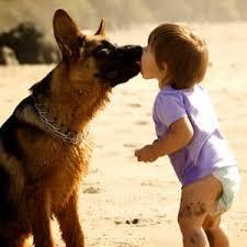 belgian shepherd hypoallergenic got allergies these hypoallergenic dog breeds are your new best