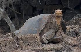 imagenes de animales y cosas las 10 cosas y animales más solitarios del planeta