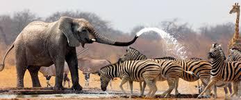 african safari animals south africa highlights city safari victoria falls and more