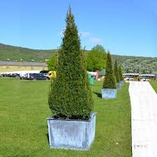 Large Tree Planters by Extra Large Copper Planters Rosara