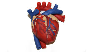 how to make a human heart with play doh by tiger tomato youtube