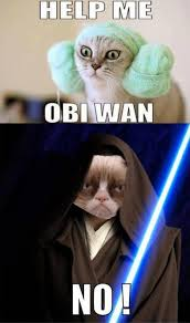 May The Force Be With You Meme - may the force be with you grumpy grumpy cat pinterest