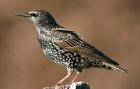 Florida Backyard Birds - common backyard birds