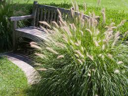 best ornamental grasses for containers growing small