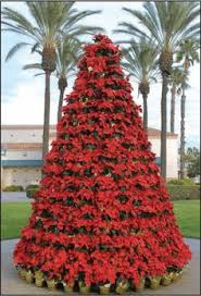 poinsettia tree poinsettia tree this is glorious wouldn t this be beautiful at a
