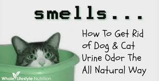 My Cat Peed On My Bed Get Rid Of Dog And Cat Urine Odors The All Natural Way Whole