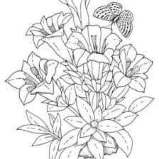flower coloring pages for adults give the best coloring pages