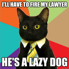 Lawyer Cat Meme - dueling memes lawyer dog vs business cat lawyer dog and memes