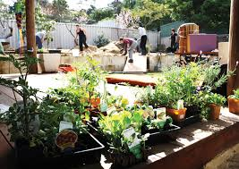 permaculture design principle from patterns to details