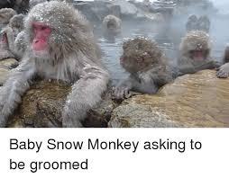 Baby Monkey Meme - baby snow monkey asking to be groomed monkey meme on me me