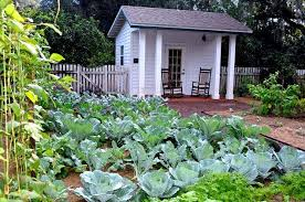 florida gardeners share tips for fall vegetable gardens u2014 what are