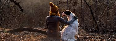 traveling with pets images Traveling with pets smartertravel jpg