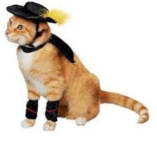 Funny Halloween Animal Costumes 93 Halloween Cats Images Animals Halloween