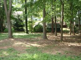 backyard brush removal natural area maintained landscaping tree