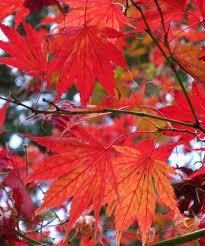 fall leaves tokyo jonelle patrick u0027s