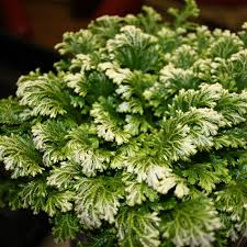 flowers and plants spicing up your winter decor with ontario grown flowers and plants