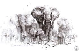 david shepherd signed limited editions prints elephant sketch