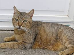 qui pisse sur le canapé fresh les amis des chats de bligny hd