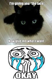 Funny Kitten Memes - kitten memes best collection of funny kitten pictures