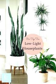 home decor with plants plants decor home decor plants home decor ideas with plants plants