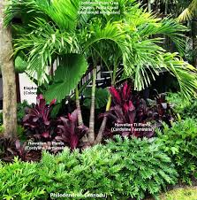 25 beautiful tropical plants ideas on pinterest green leaves