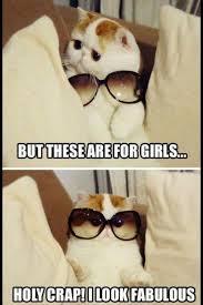 Funny Kitten Meme - funny kitten meme