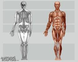 Human Anatomy Reference 348 Best 인체 캐릭터 Images On Pinterest Anatomy Reference