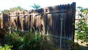 passion fruit vine as a natural privacy fence mind your dirt