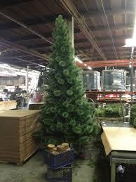 giant long needle pine christmas trees barrango inc