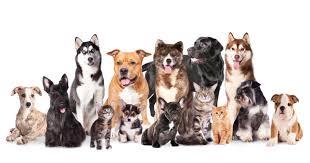 coastal pet services
