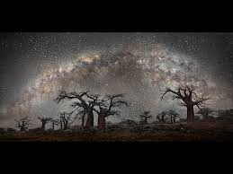 stunning photos of africa s oldest trees framed by starlight arts
