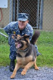 999 best military dogs images on pinterest military dogs