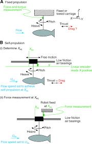 fish biorobotics kinematics and hydrodynamics of self propulsion