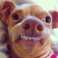 Brace Face Meme - 18 best animals with braces images on pinterest funny stuff funny
