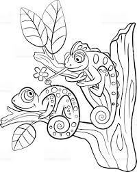 coloring pages wild animals two little cute chameleon stock vector