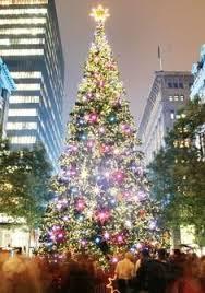 Christmas Outdoor Decorations Sydney by Christmas Tree At Circular Quay Sydney Australia Christmas