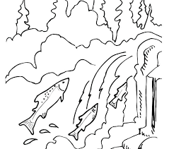 salmon fish coloring page salmon coloring pages denvermetro info