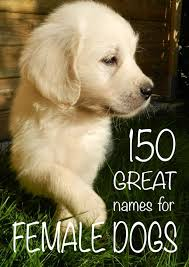 australian shepherd dog names 150 female dog names great names for puppies the happy