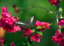 butterflies on flowers flowers butterfly natural beauty desktop
