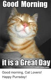 Good Morning Cat Meme - good morning it is a great day cataddictsanony mouse good morning