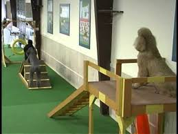 Dog Playground Equipment Backyard by Dog Indoor Obstacle Course Doggie Jungle Gym Pinterest