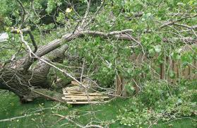3 pillars of tree care review repair replace tree services