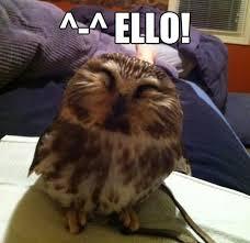 Funny Hello Meme - 30 funny animal captions part 18 30 pics amazing creatures
