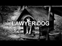 Dog Lawyer Meme - lawyer dog video gallery know your meme