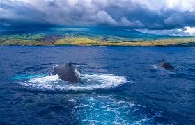 hawaiʻi the big island travel lonely planet