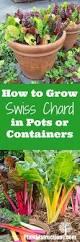2701 best garden ideas images on pinterest gardening plants and