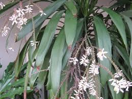 native plants nz nz trees the trees u0026 flowers of whangarei